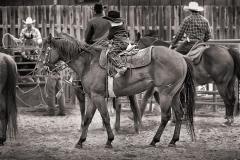 Montanayoungcowboyweb