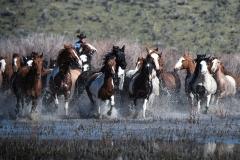 Horses Water run