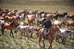 cowboy with herd