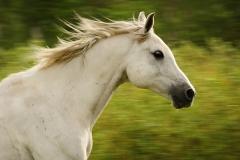 horseblursmall