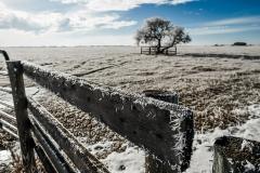 hoar frost fence